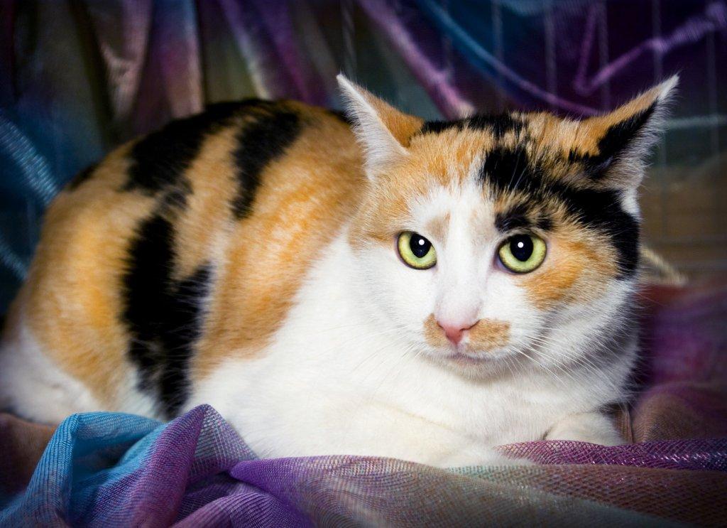 Гора кошка в крыму фото тыква