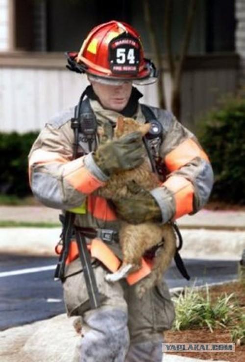 Надписью уходи, картинка с двумя котами вынесенными из пожара