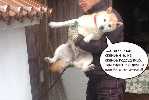 Собака - помогака.