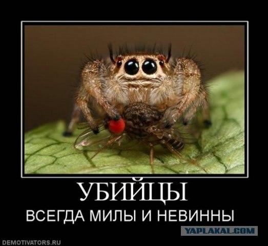 Картинки по запросу демотиватор муха и паук