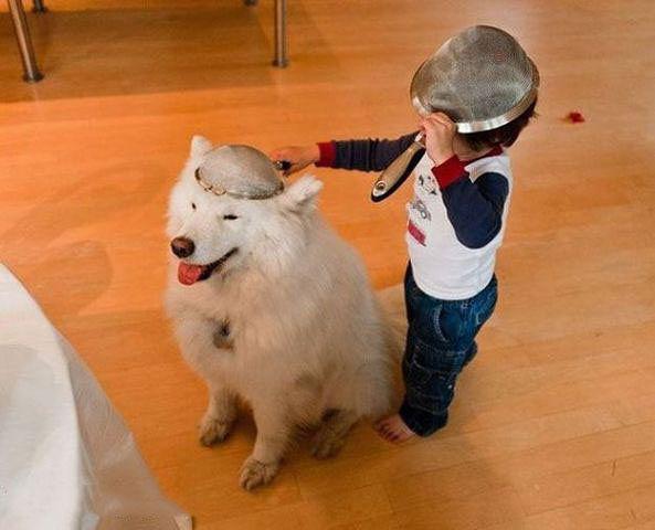 Собаки, ради которых стоит заходить в интернет