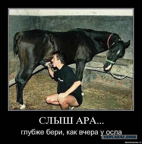 Молодые кавказцы трахают ишаков