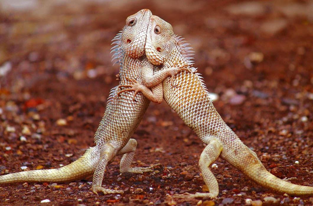 Открытки, картинки смешных ящериц