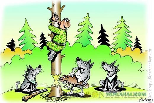 В лесу порой опасно ходить - бобры шалят