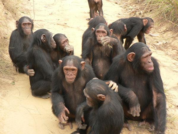 Приматы и люди секс