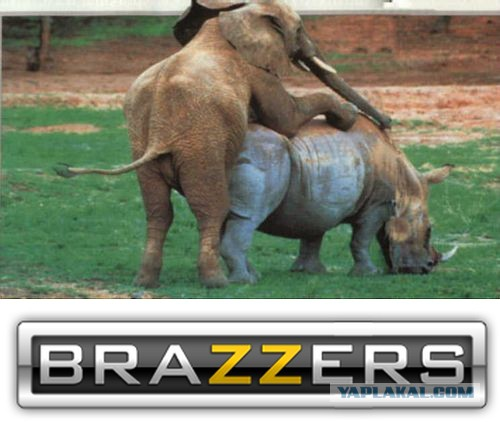 Слон трахает носорога