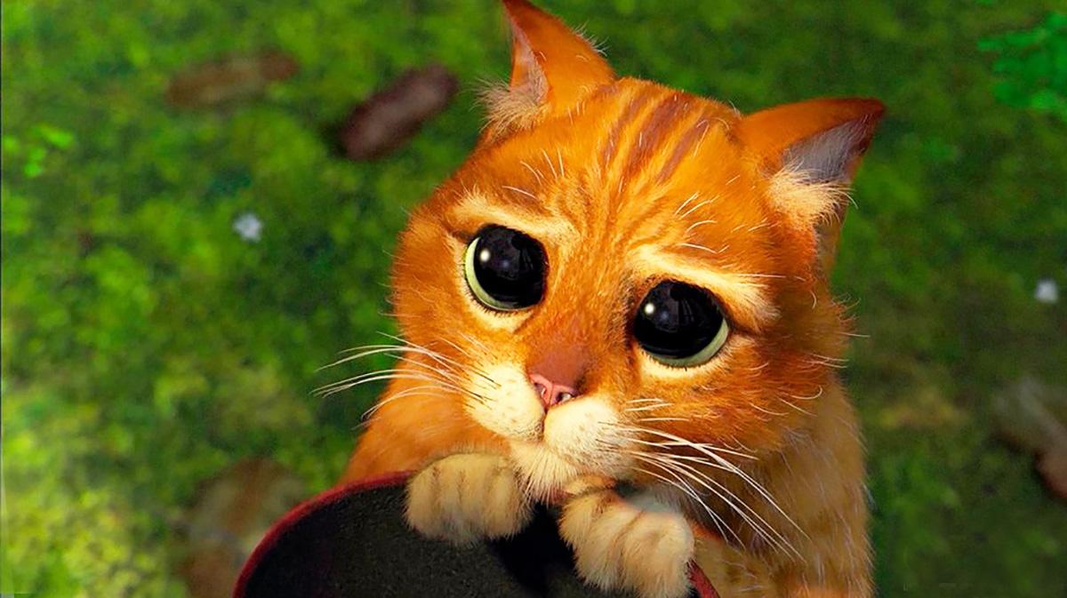 Картинка фото котика просящего прощения