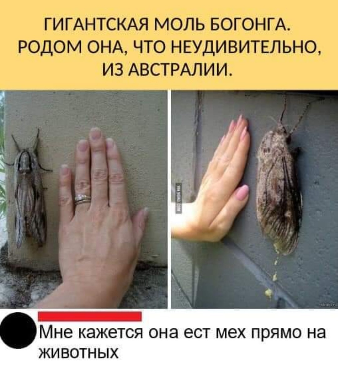 https://s00.yaplakal.com/pics/pics_original/8/2/1/14351128.jpg