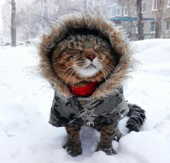ЯПовцы! К зиме готовы?