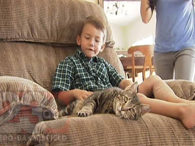 Кот мальчик и собака мальчик
