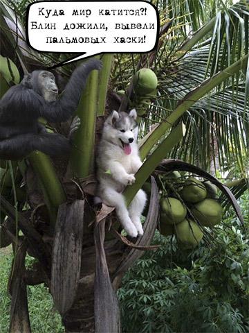 Щенок хаски застрял на пальме