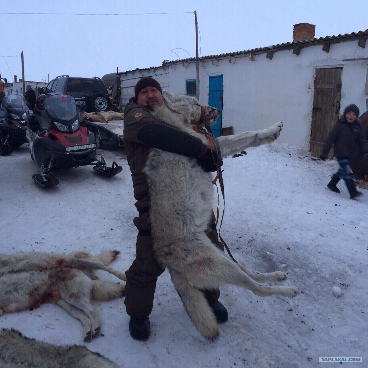 фото черепа волка и алабая кадры награждения победителей