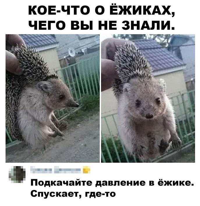 https://s00.yaplakal.com/pics/pics_original/8/4/3/15372348.jpg