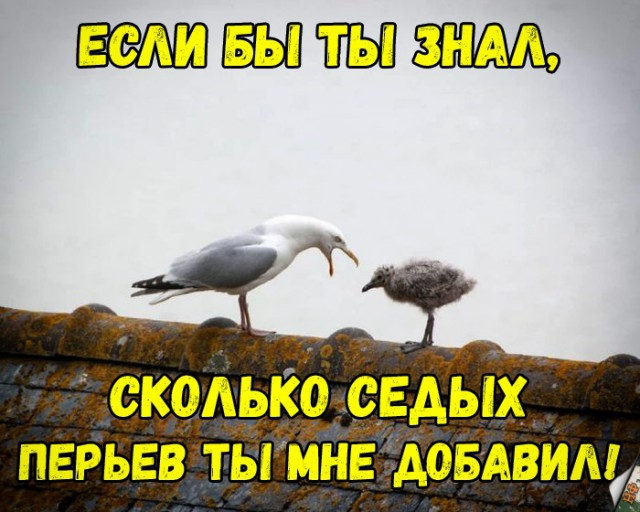 https://s00.yaplakal.com/pics/pics_original/8/5/1/13755158.jpg