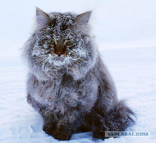 Зима кот картинка