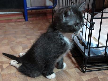 Котенок, которым дети в Липецке играли в бейсбол, нашел дом