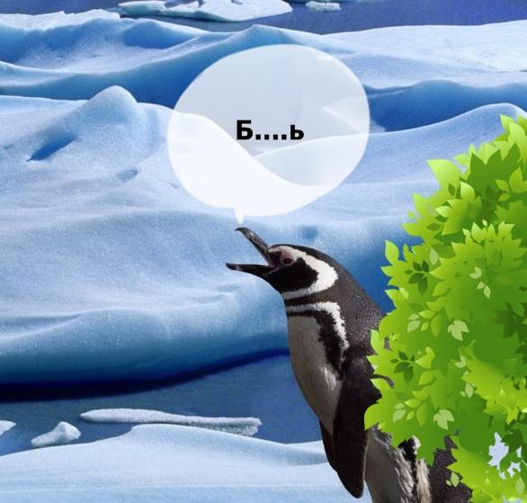 Пингвинья драма: пингвиниха изменила мужу и ушла с любовником