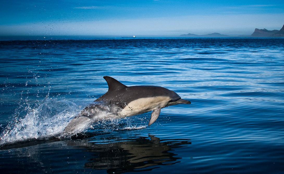 Дельфинчик член