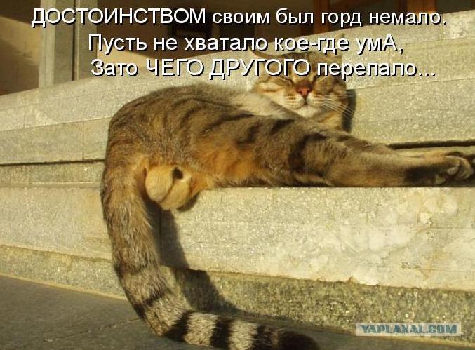 Жопка кота