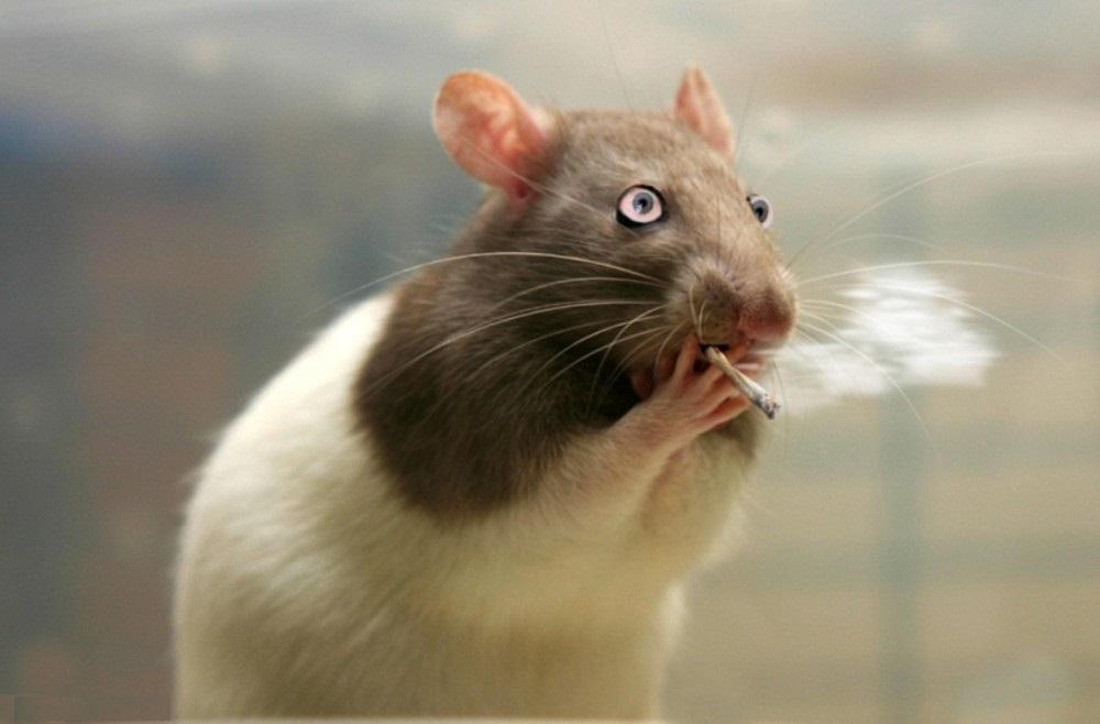 Картинки с мышами смешные