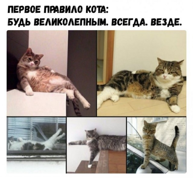 https://s00.yaplakal.com/pics/pics_original/8/8/1/14682188.jpg