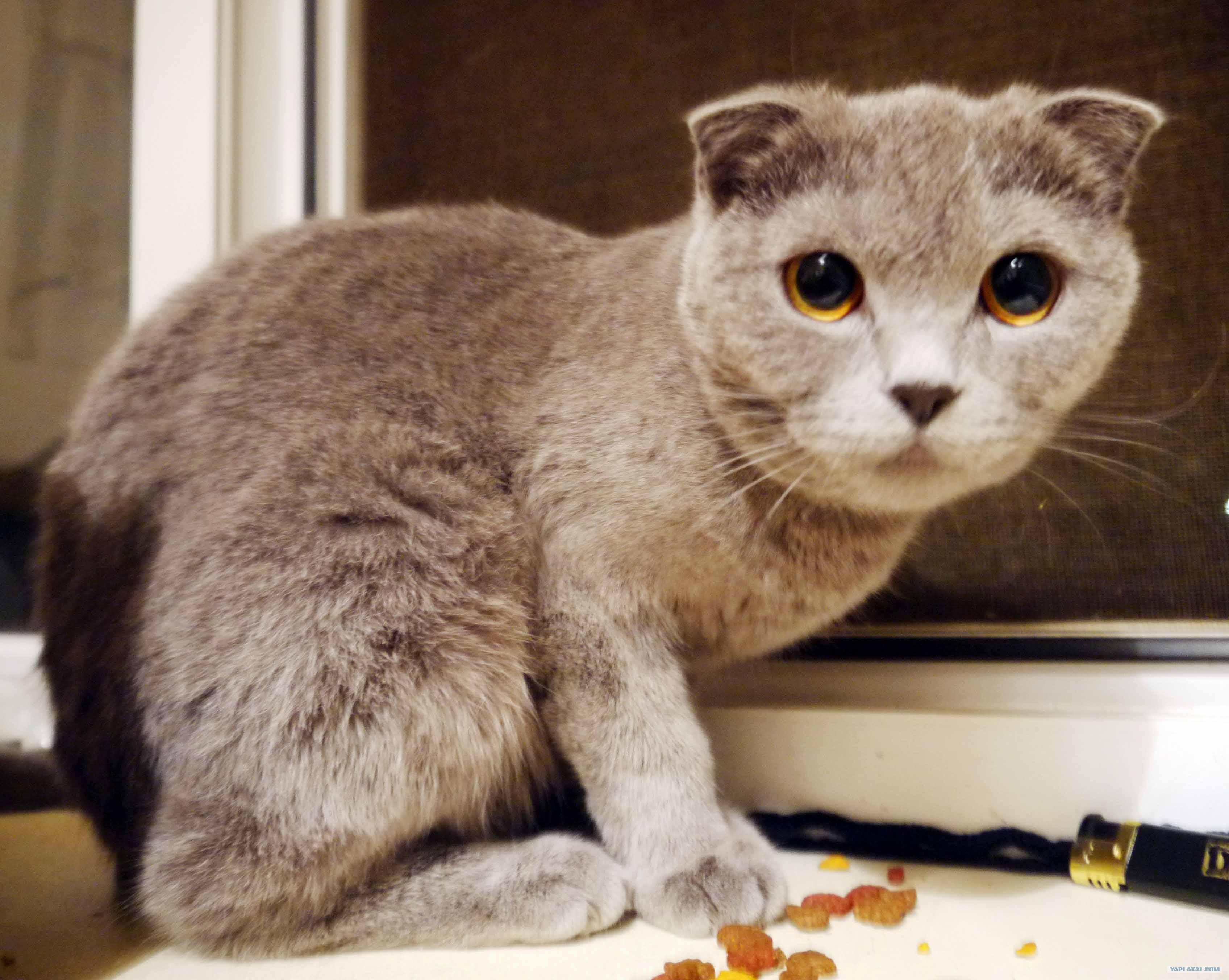 Кастрированный кот визде срет