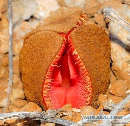 Изображение хуя с цветком