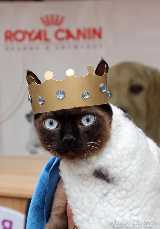 Картинки приколы корона