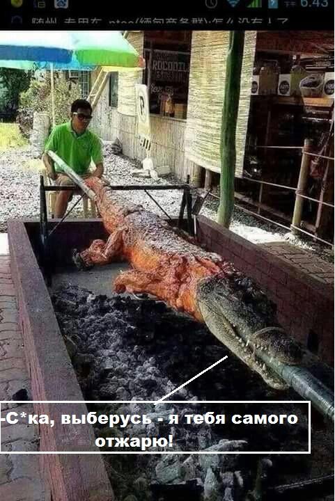 Крокодилятина