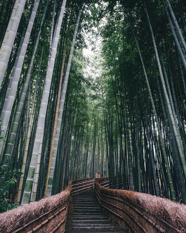 25 кадров уличной фотографии, которые открывают неизвестную сторону Японии