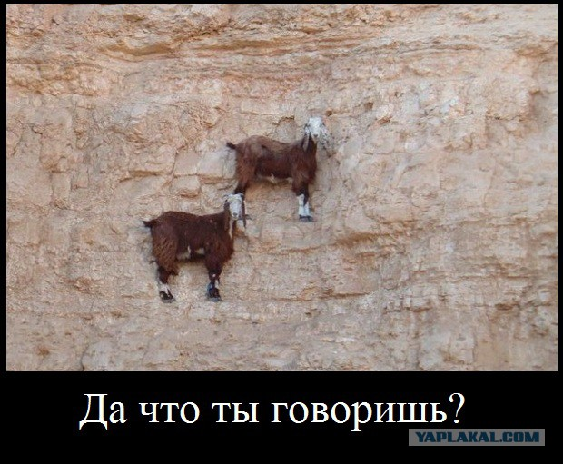Горный Алтай. Сентябрь