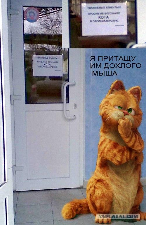 фотосессии демотиваторы дорогой ты кота впустил читающими