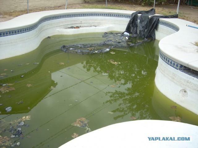 сон бассейн с грязной водой сюрпризом своими
