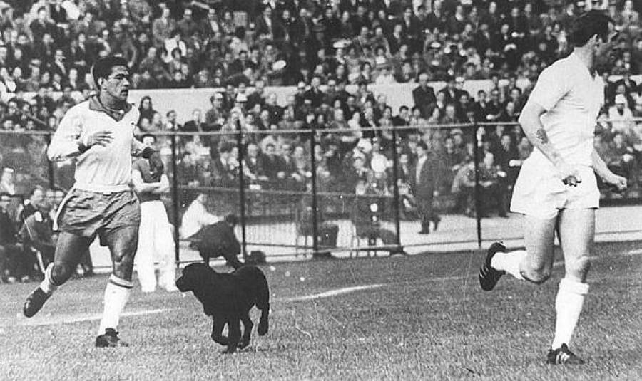 Бразилия - Англия, 1962. Собака на поле