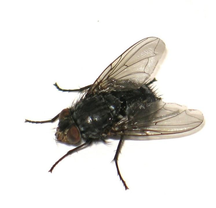Картинка в вк муха