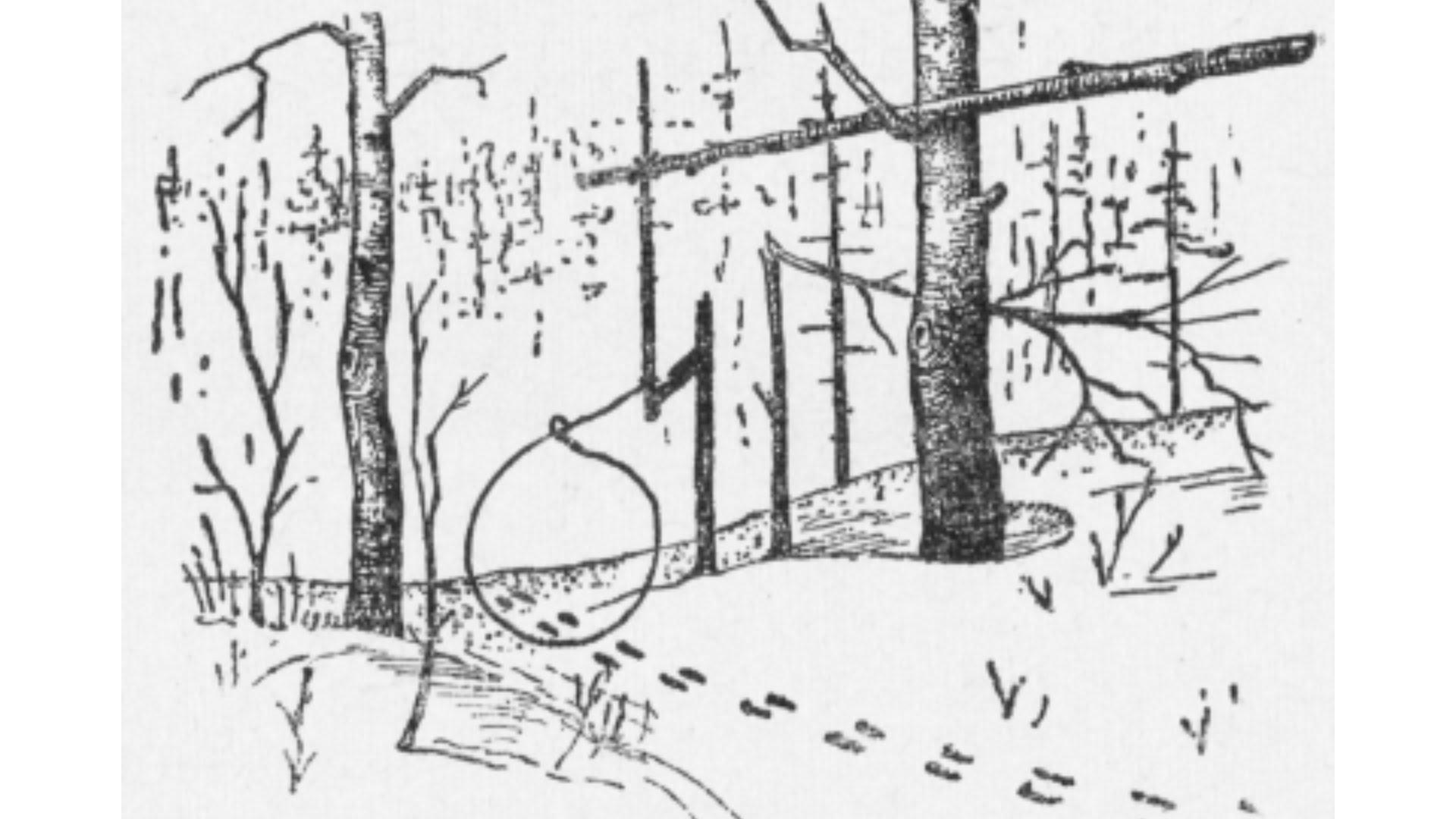 таинство ловушка на лису своими в картинках золотая