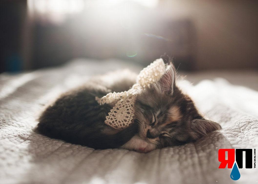 50 интересных фактов о кошках