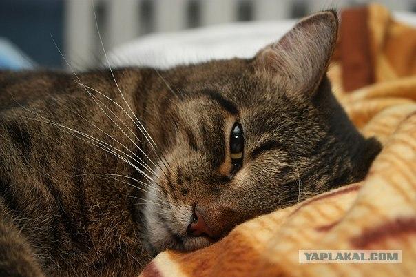 Заплаканный кот (Crying Cat, Кот с заплаканными глазами)