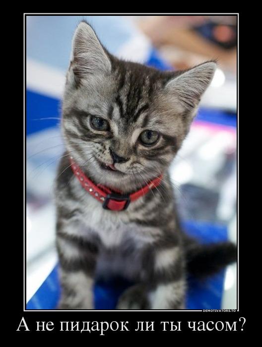 non dust cat litter