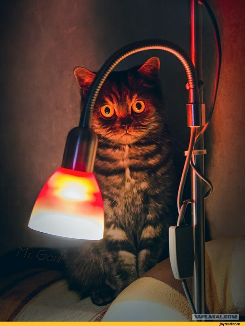 Картинка кот и лампа
