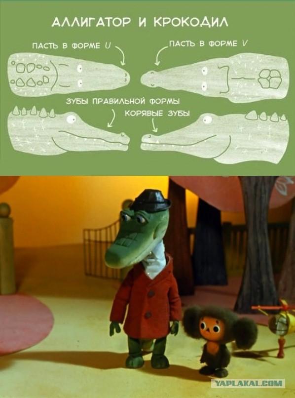 гена крокодил картинки приколы гнездящиеся уральских