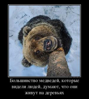 Медведь утащил собаку