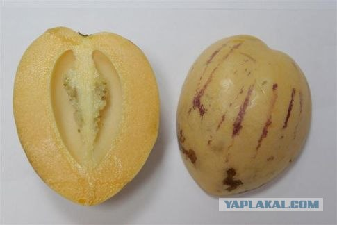 Экзотические фрукты и с чем их едят