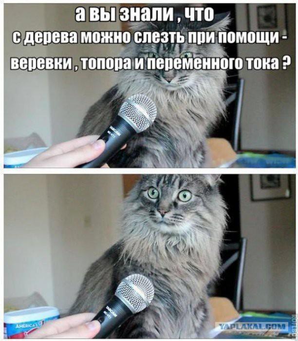 Зато я спас кота enjoykin cover.