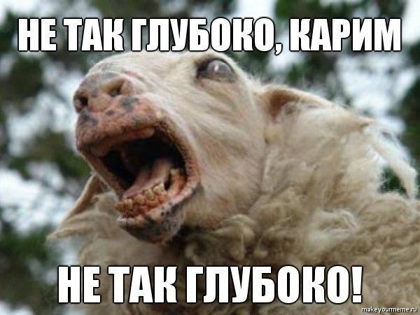 Чурка ебет овцу