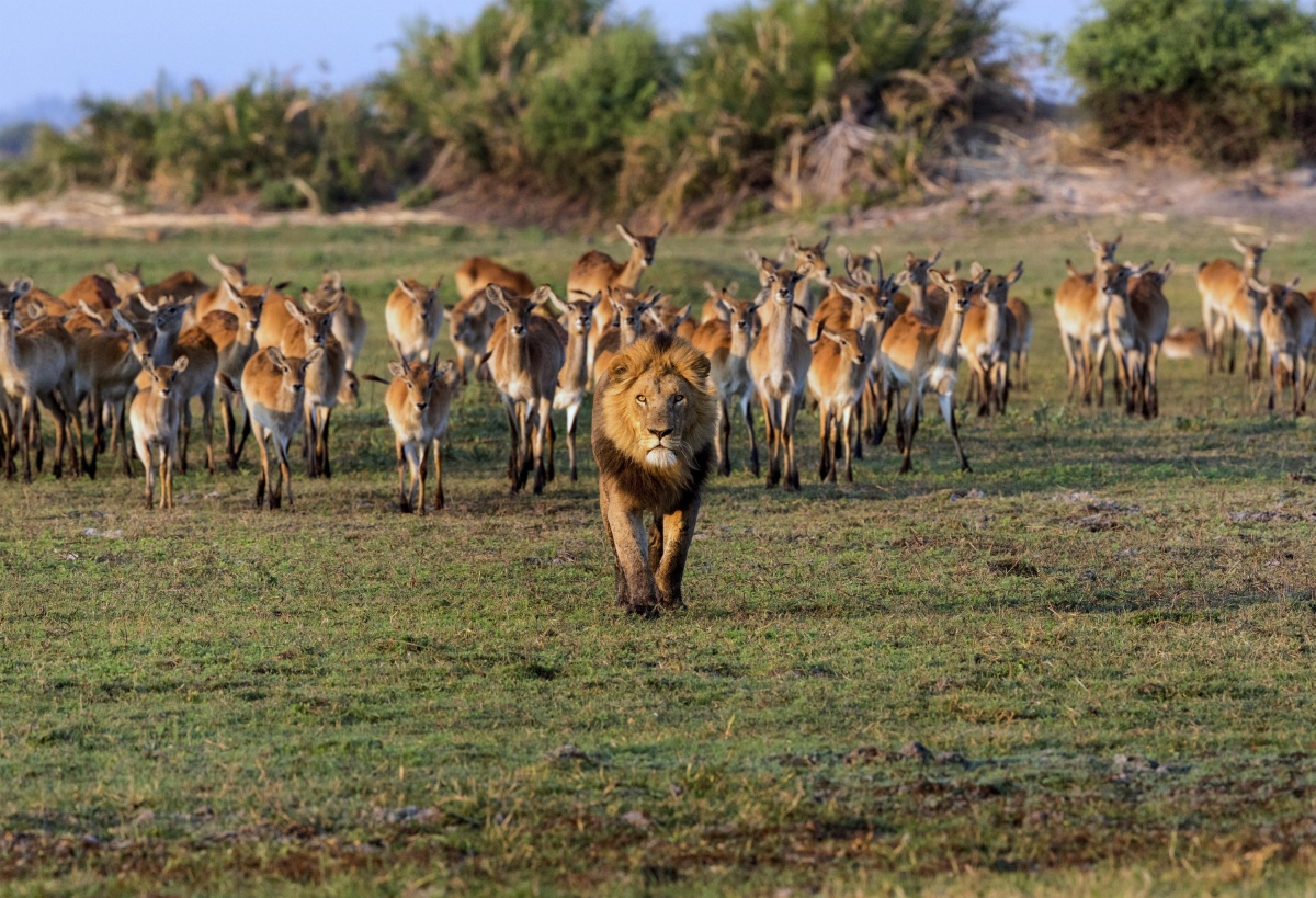 Картинки стадо антилопа