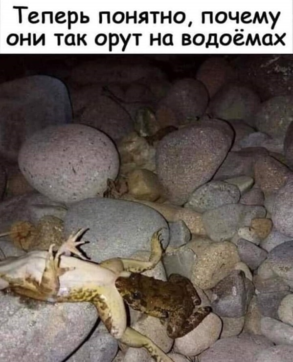 https://s00.yaplakal.com/pics/pics_original/9/8/0/13188089.jpg