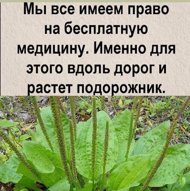 https://s00.yaplakal.com/pics/pics_original/9/8/0/16040089.jpg