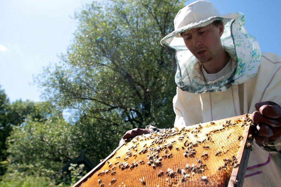 Прикольные картинки пчеловода, надписями кошкам нет