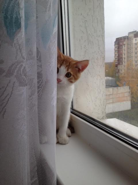 Выглядывающие коты